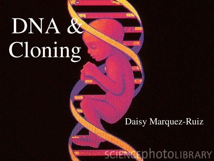 DNA & Cloning Daisy Marquez-Ruiz