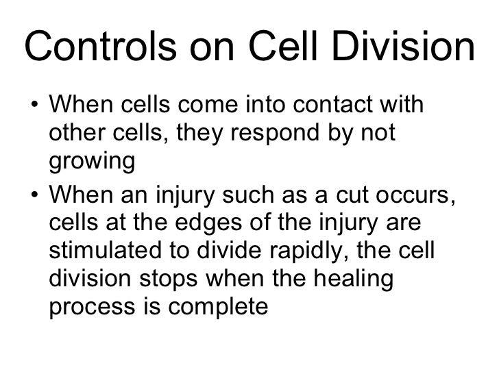 biology chapter 10 cell division worksheet. Black Bedroom Furniture Sets. Home Design Ideas