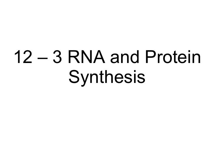 Section 12 3 Rna And Protein Synthesis Worksheet Answers : Biology  Chp   Dna  Rna  Powerpoint With    Rna And Protein Synthesis  From Slideshare.net Photos