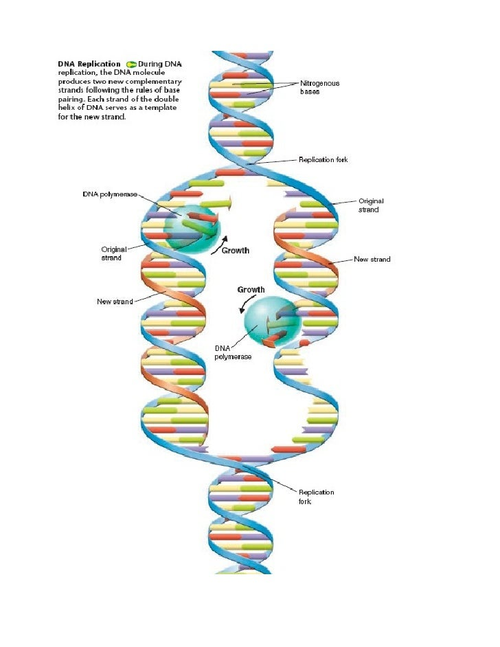 Biology - Chp 12 - DNA and RNA - Notes