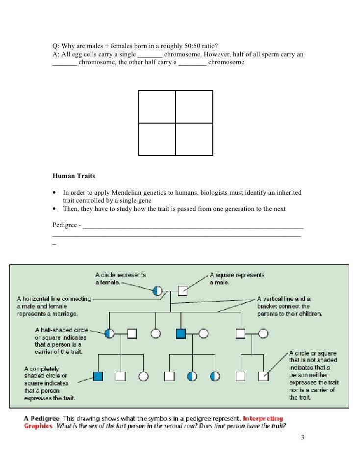 Biology - Chp14 - Human Heredity - Notes
