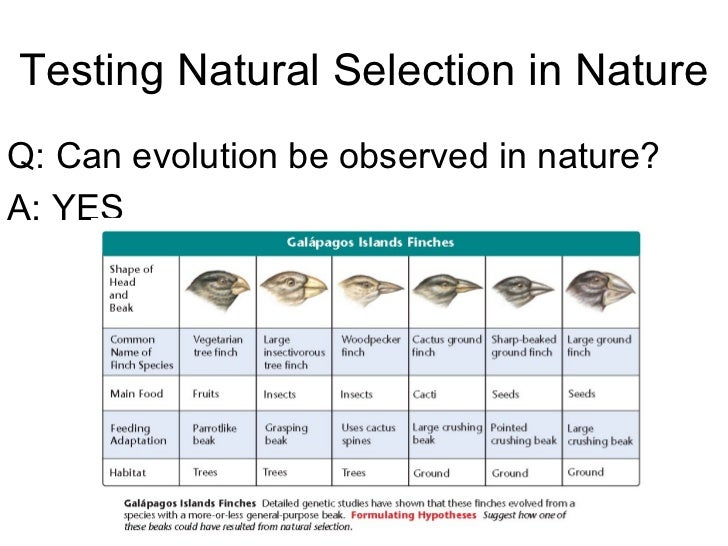 Difference Between Natural Selection And Speciation