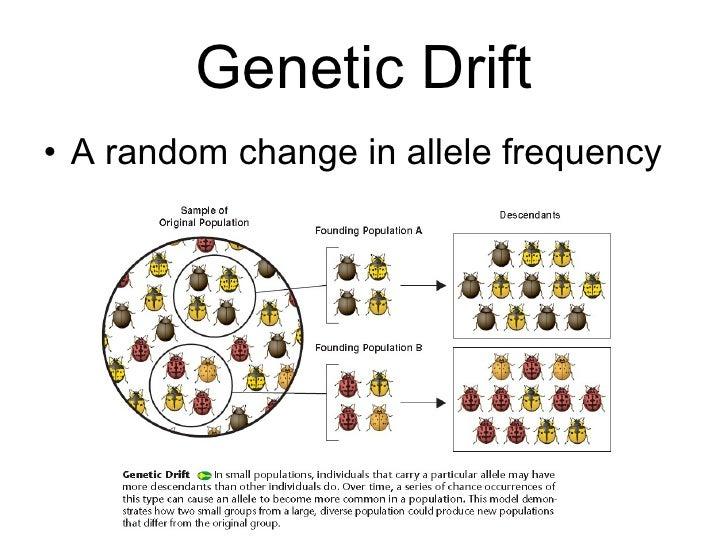 genetic drift worksheet resultinfos. Black Bedroom Furniture Sets. Home Design Ideas