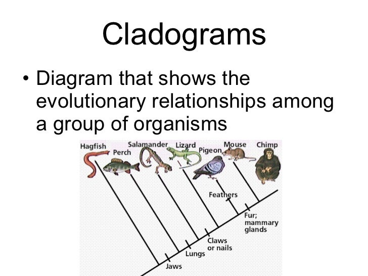 Biology Chp 18 Classification PowerPoint – Classification Worksheet Biology