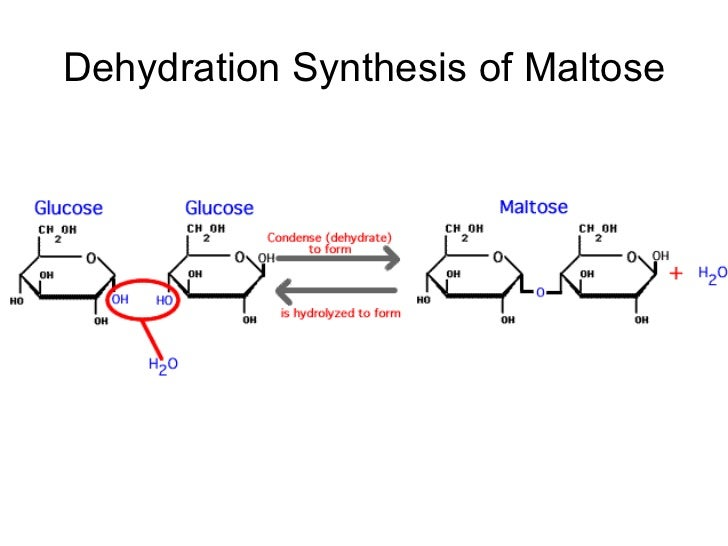 dehydration synthesis formula Working with macromolecules: a take-home minds-on lab (dehydration synthesis and hydrolysis) introduction: 96 per cent of all living matter is composed of only four elements.