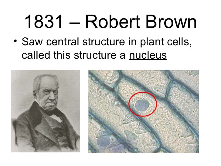 robert brown scientist