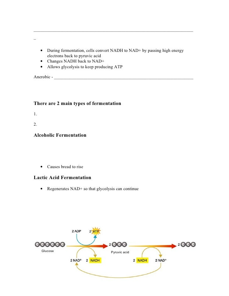 chapter 9 cellular respiration yelom myphonecompany co rh yelom myphonecompany co Study Guide Template Study Guide Template