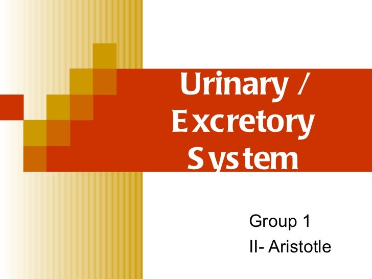 Urinary / Excretory System Group 1 II- Aristotle