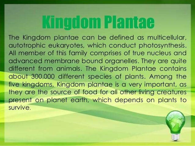 Kingdom Plantae