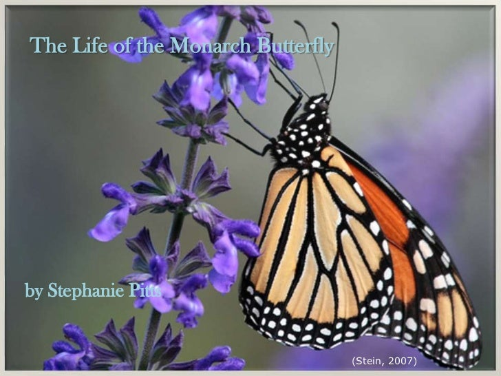 The Life of the Monarch Butterflyby Stephanie Pitts                                    (Stein, 2007)