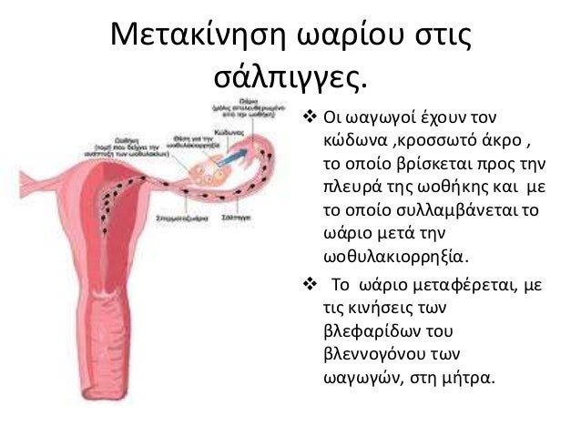 Μήτρα  Είναι κοίλο μυώδες όργανο, με διαστάσεις 5-8cm μήκος ,5 cm πλάτος και σχήμα αναποδογυρισμένου αχλαδιού.  Βρίσκετα...