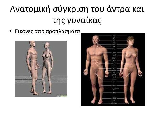 Ανατομική σύγκριση του άντρα και της γυναίκας • Εικόνες από προπλάσματα