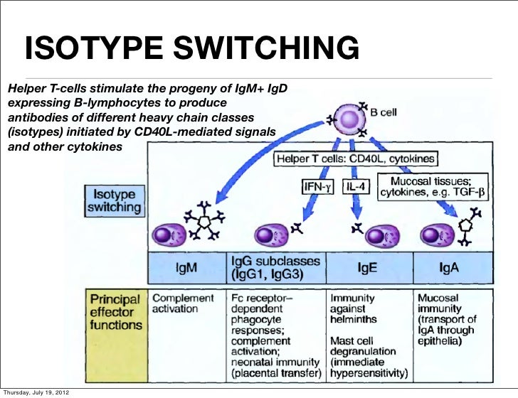 isotype switching