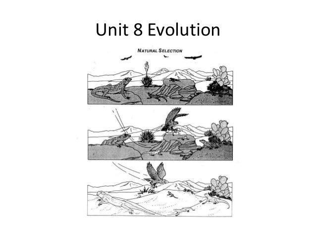 Biology 163 2nd semester review lmk 2013