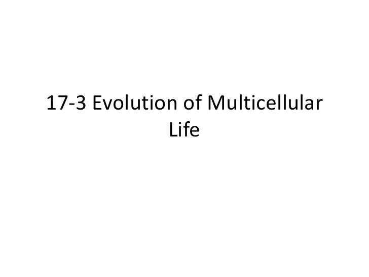 17-3 Evolution of Multicellular Life<br />