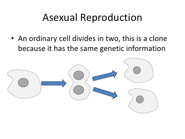 Asexual reproduction definition gcse exams