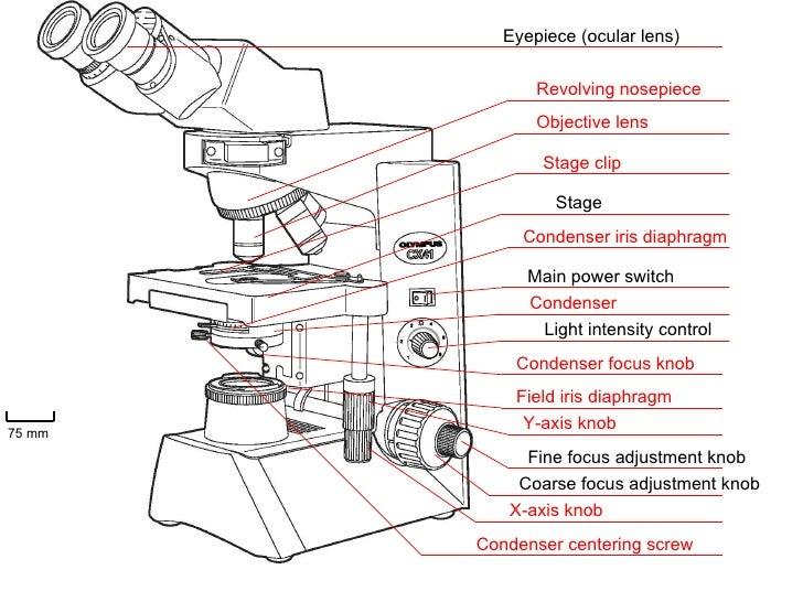 Label the microscope worksheet