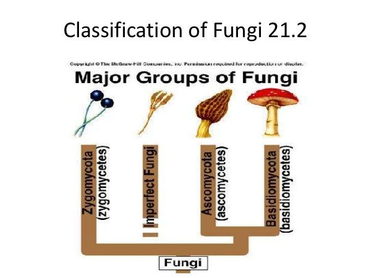 Classification of Fungi 21.2<br />