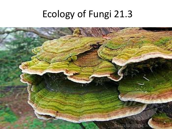 the ecology of fungi 2017-1-10  fungi appear to be rare in marine environments there are relatively few marine isolates in culture, and fungal small subunit ribosomal dna (ssu rdna) sequences are rarely recovered in marine clone library experiments (ie, culture-independent sequence surveys of eukaryotic microbial diversity from environmental.