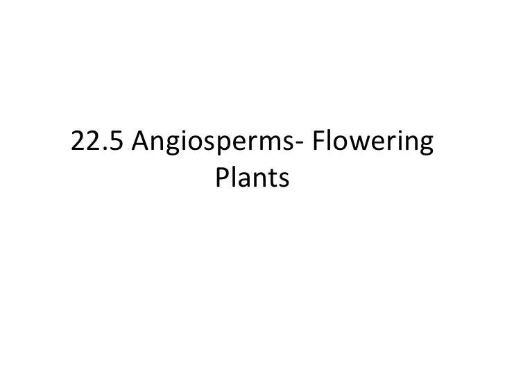22.5 Angiosperms- Flowering           Plants