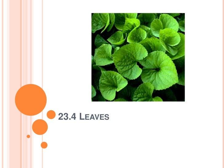 23.4 Leaves <br />