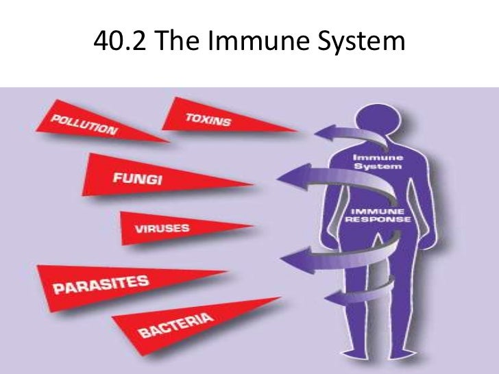 40.2 The Immune System<br />