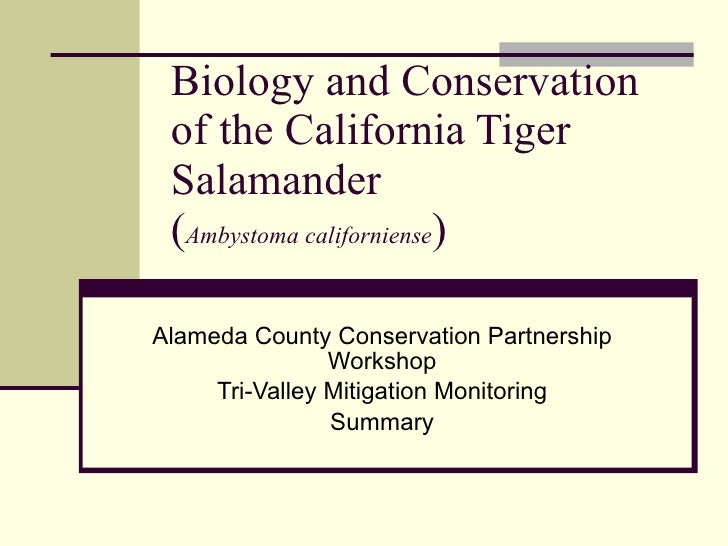 Biology and Conservation of the California Tiger Salamander ( Ambystoma californiense ) Alameda County Conservation Partne...