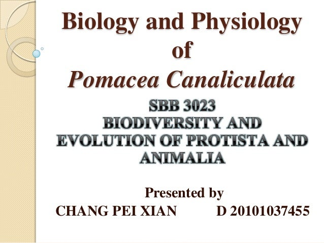 Biology and Physiology          ofPomacea Canaliculata          Presented byCHANG PEI XIAN       D 20101037455