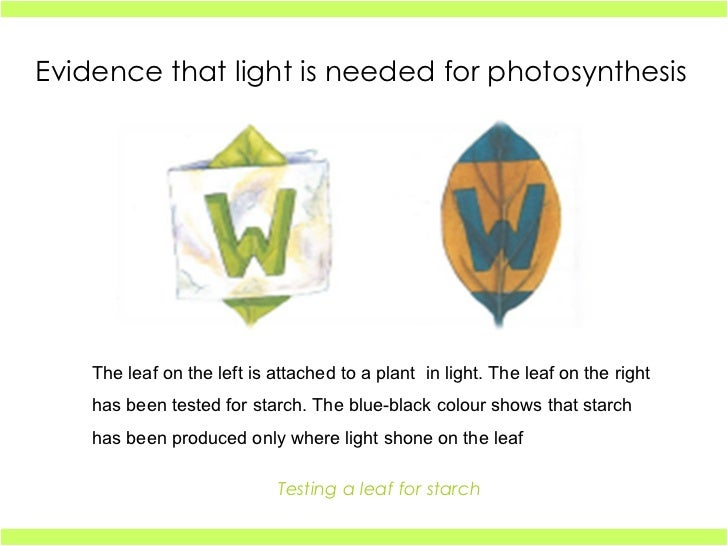 What Is Needed for Photosynthesis to Occur?   Reference.com