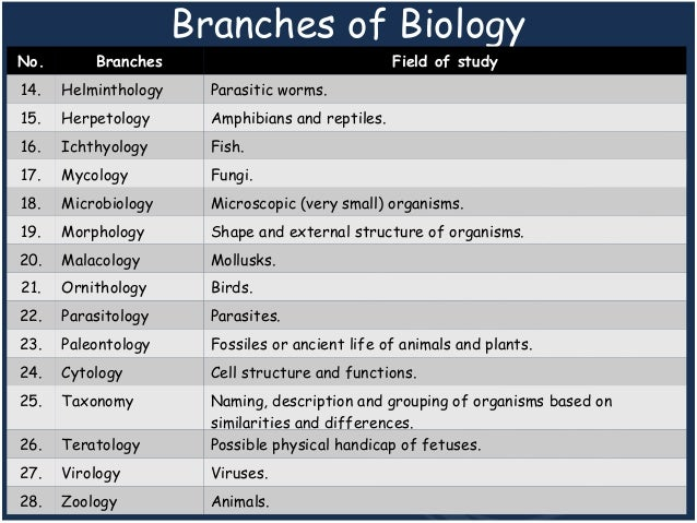 Branches of Biology: What are the Branches of Biology