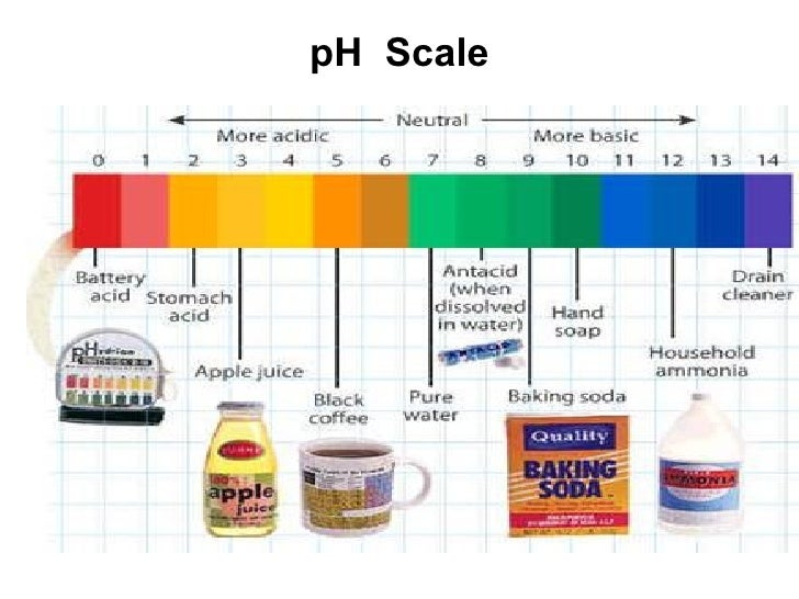 Ph Biology Example