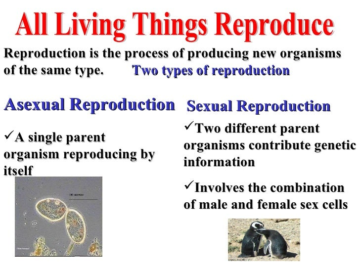 Biology Characteristics Of Living Things Jpg 728x546 Biology Living Creatures Meaning