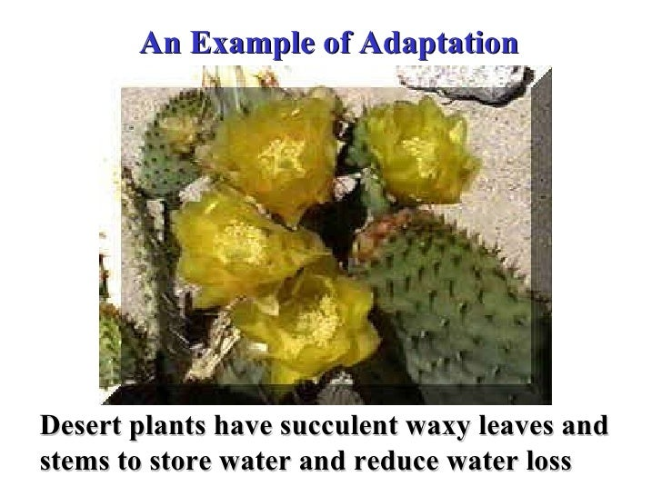 biology adaptation Time-saving video on plant adaptation plant adaptation is commonly defined as the special features that allow a plant to live in a particular place or habitat plant adaptation is an.