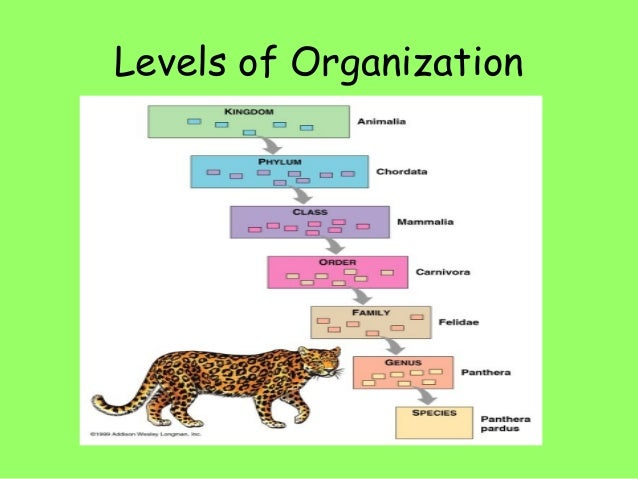Biology eoc review slideshow