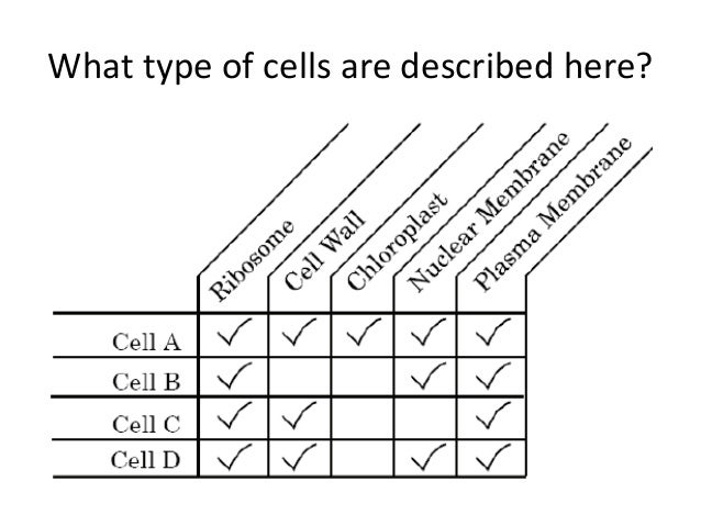 Biology eoc review (with extra questions) jan 2015