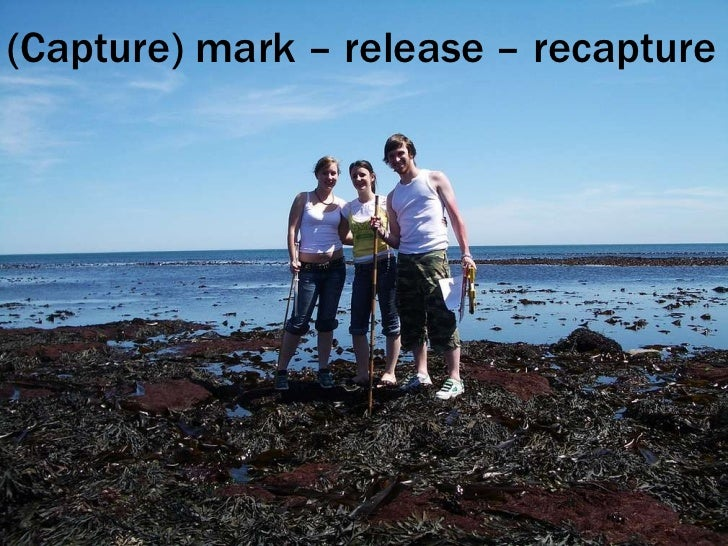 (Capture) mark – release – recapture