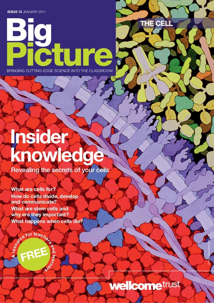 ISSUE 13 jANUARY 2011Big                                                     THE CELLPicturebRiNgiNg CUTTiNg-EDgE SCiENCE ...