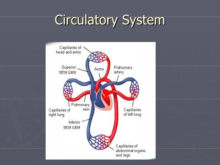biology final Biology (cp) final exam study guide cover page biology (cp) final exam study guide 1 biology (cp) final exam study guide 2 biology (cp) final exam study guide 3 biology (cp) final exam study guide 1 answers biology (cp) final.