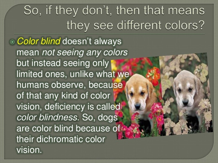 are dogs color blind 87795