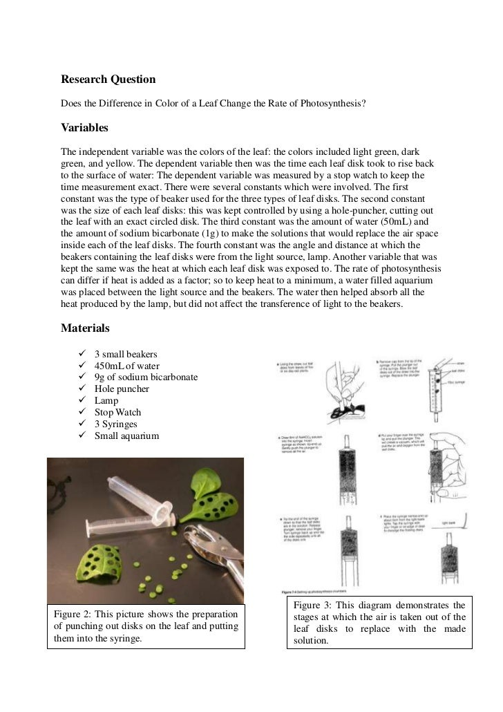 biology 101 photosynthesis lab report Huge list of biology lab experiment ideas, experiments topics, models ideas for kids and also for middle school, elementary school for class 5th grade,6th,7th,8th,9th 10th,11th, 12th grade and high school ,cbse, isc class 12 and msc and college students.