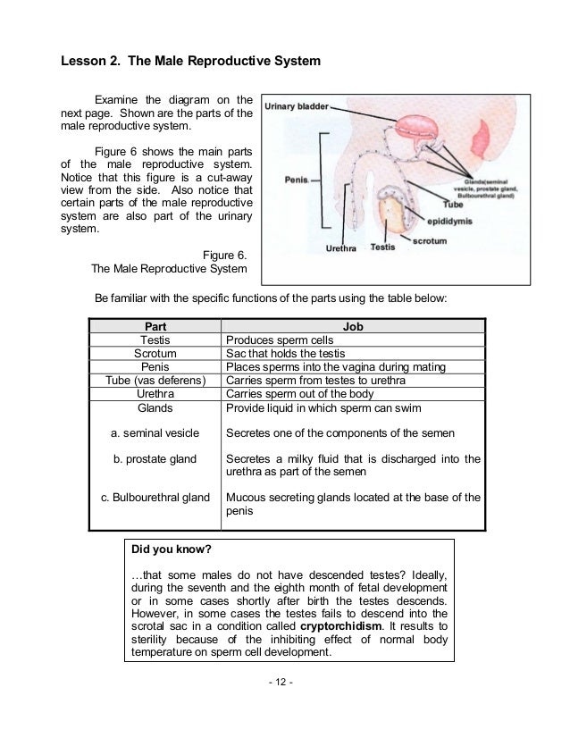 Biology M13 Human Reproductive System