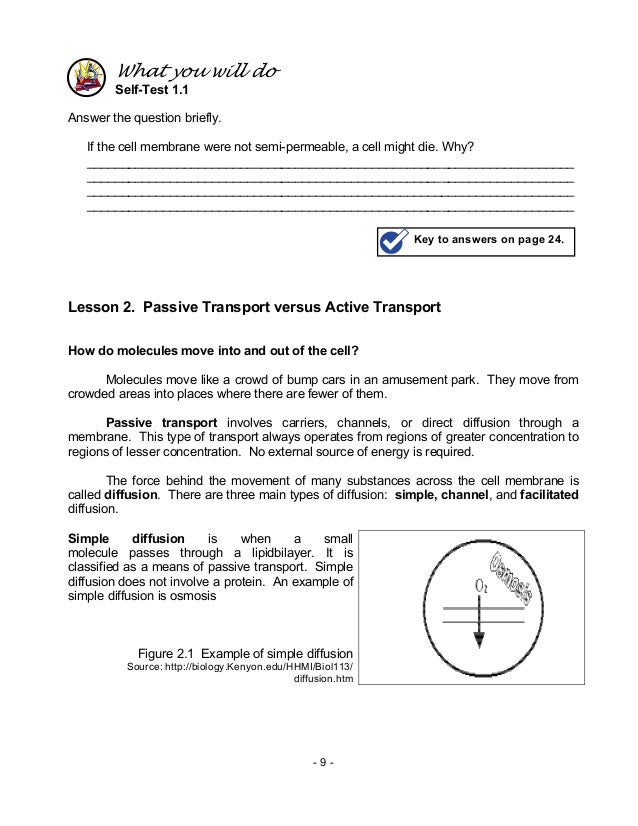 Passive Transport Worksheet Answers