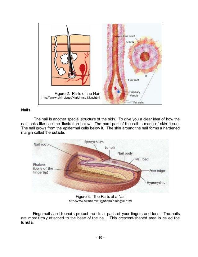 Biology M8 Integumentary Excretory Systems