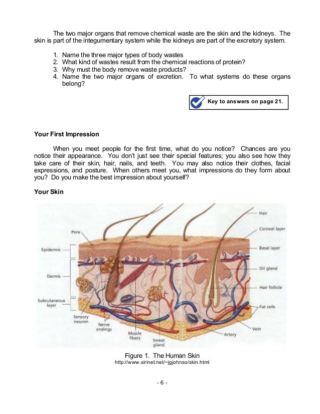 Biology M8 Integumentary Excretory Systems