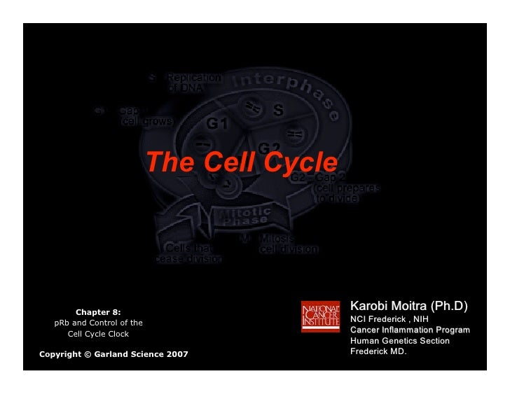 The Cell Cycle             Chapter 8:                                              Karobi Moitra (Ph.D)    pRb and Control...