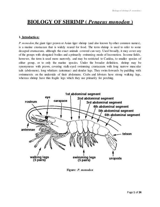 Biology of shrimp( P. monodon ) Page 1 of 24 BIOLOGY OF SHRIMP ( Penaeus monodon ) 1. Introduction: P. monodon,the giant t...