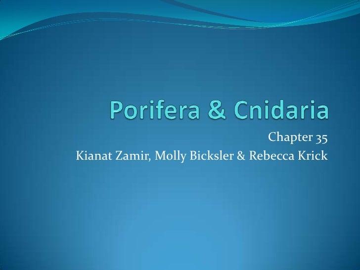 Porifera & Cnidaria<br />Chapter 35<br />KianatZamir, Molly Bicksler & Rebecca Krick<br />