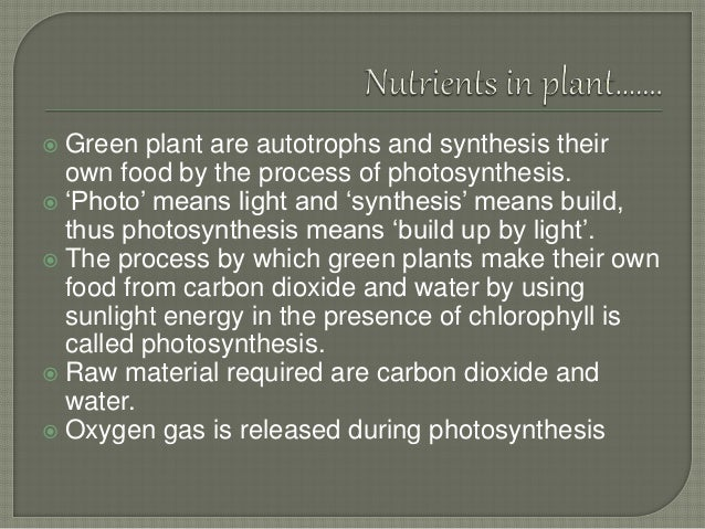 Organism Like A Green Plant That Make Its Own Food