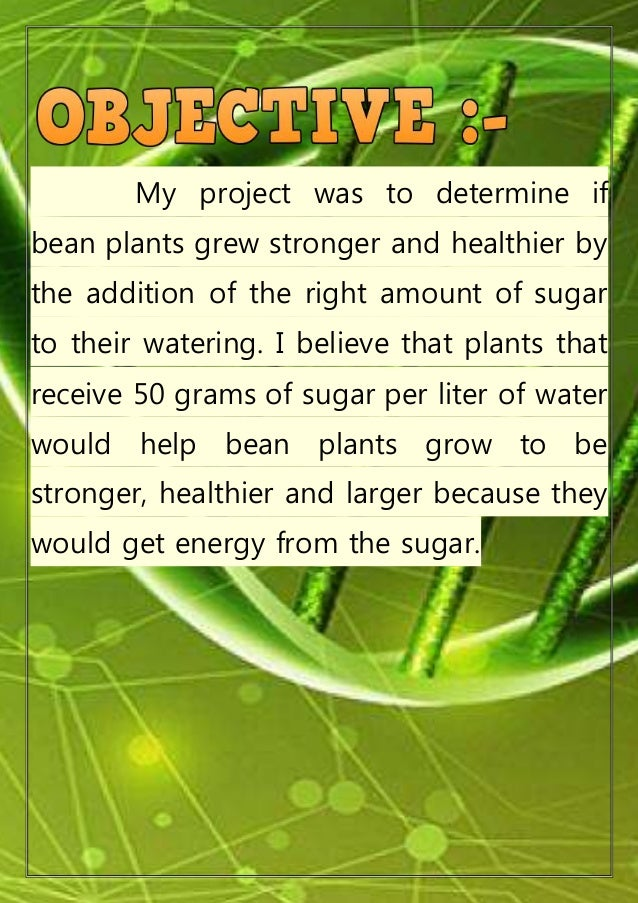 effect of sugar on bean plant growth