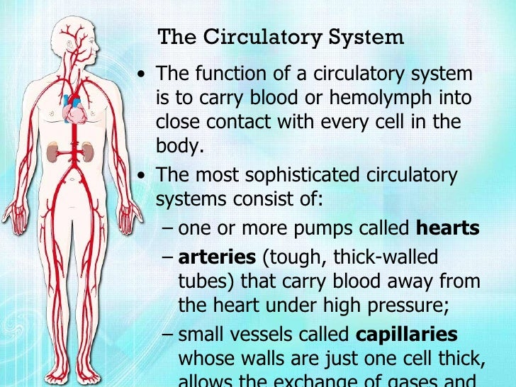 Biology Project Circulatory System Vijay Raja Std Vii Navdeep With